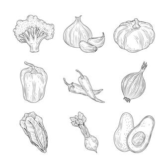 Broccoli peper knoflook ui wortel bieten groenten verse biologische aard, hand getrokken stijl