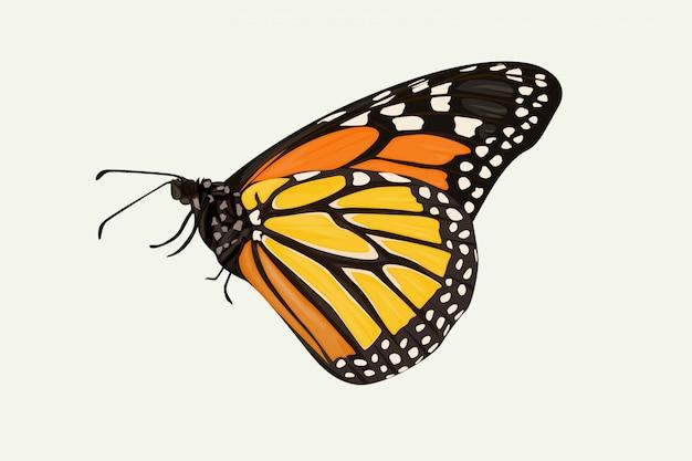 Bruin gevleugelde vlinder hand tekenen