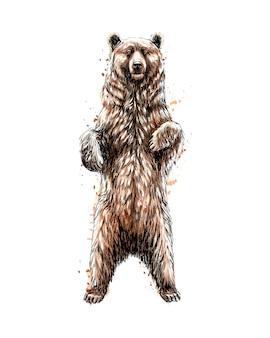 Bruine beer staande op zijn achterpoten van een scheutje aquarel