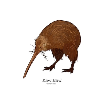 Bruine de kiwivogel van het noordeneiland, illustratie.