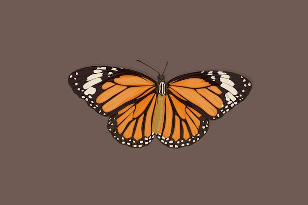 Bruine vlinder hand tekenen