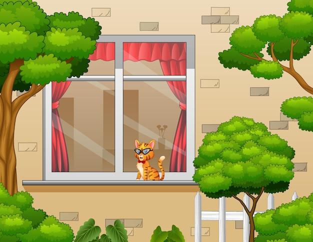 Buitenaanzicht met een kat in het raam