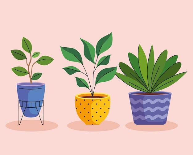 Bundel van drie kamerplanten in keramische potten