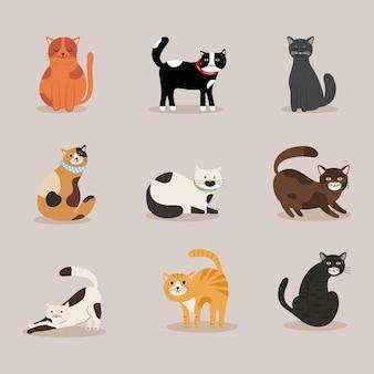 Bundel van katten verschillende kleuren mascottes karakters