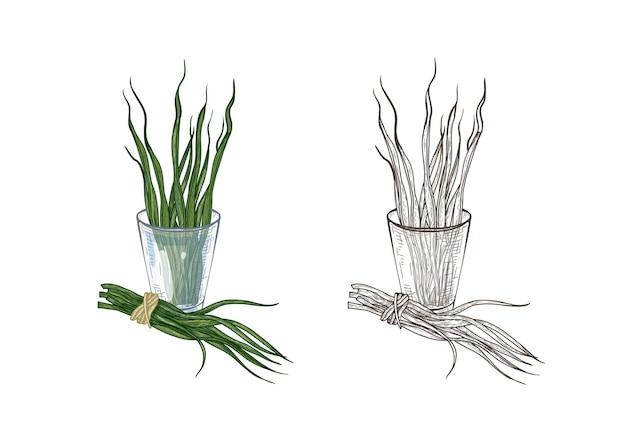 Bundel van kleurrijke en monochrome tekeningen van spirulina-algen in glas