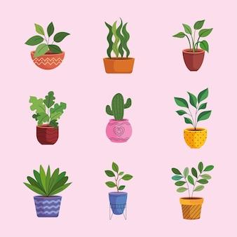 Bundel van negen kamerplanten in keramische potten
