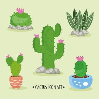 Bundel van vijf cactusplanten en belettering decorontwerp pictogrammen illustratie