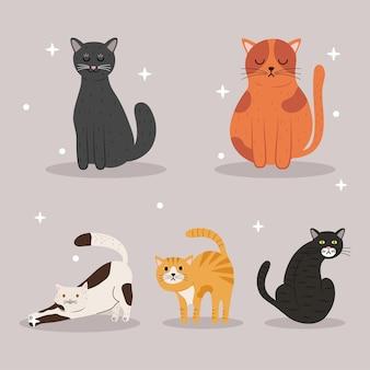 Bundel van vijf verschillende kleuren mascottes van katten