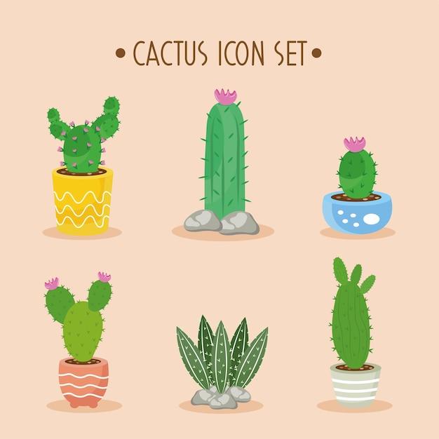 Bundel van zes cactusplanten en belettering decorontwerp pictogrammen illustratie