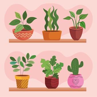 Bundel van zes kamerplanten in keramische potten boven planken