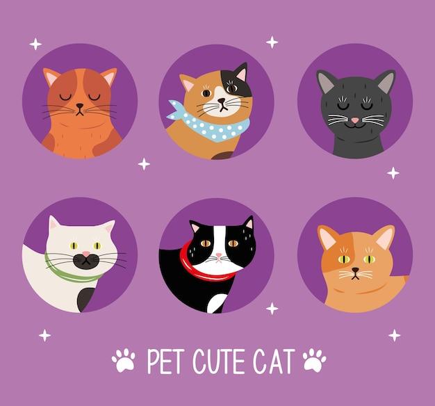 Bundel van zes katten in verschillende kleuren huisdieren en belettering