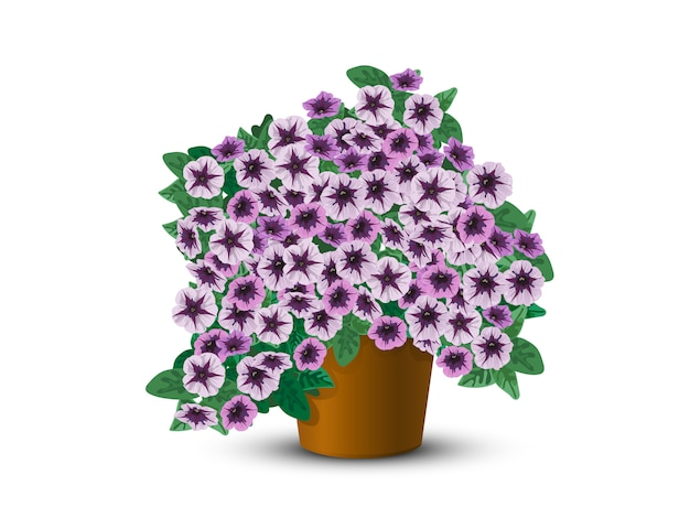 Bushpetunia in een pot