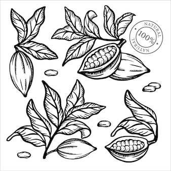Cacao collectie fruitzaden en bladeren van theobroma tree monochroom ontwerp