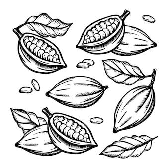 Cacao fruit en cacaobonen van theobroma tree monochrome design