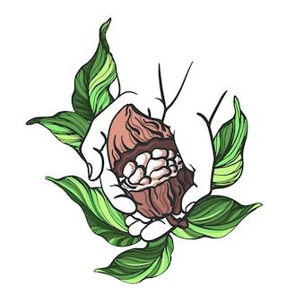 Cacao fruitboon bladeren en menselijke hand illustratie