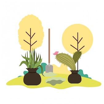 Cactus en boom om in landschap te planten