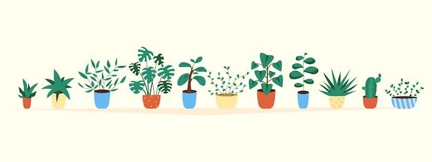 Cactus en vetplant groeien in potten. cactussen en vetplanten collectie kamerplanten.