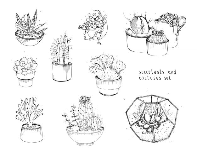 Cactus en vetplanten instellen. inzamelingsinstallaties in potten, geïsoleerd florarium