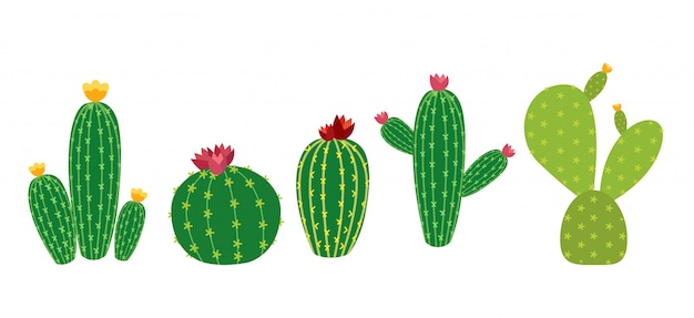 Cactus icon collection set