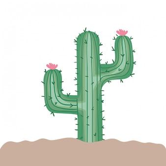 Cactus in geïsoleerd landschap