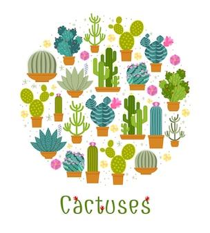 Cactus ingesteld