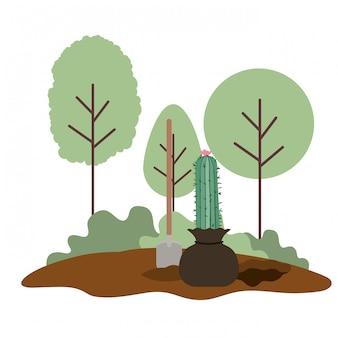 Cactus om in geïsoleerd landschap te planten