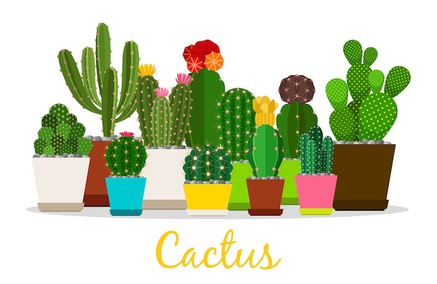 Cactus, vetplanten in potten illustratie
