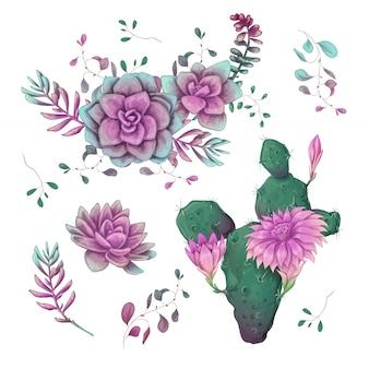 Cactussen hand getrokken op een witte achtergrond