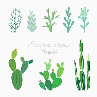 Cactussen varens mos en vetplanten geïsoleerd op witte bloemen vectorelementen