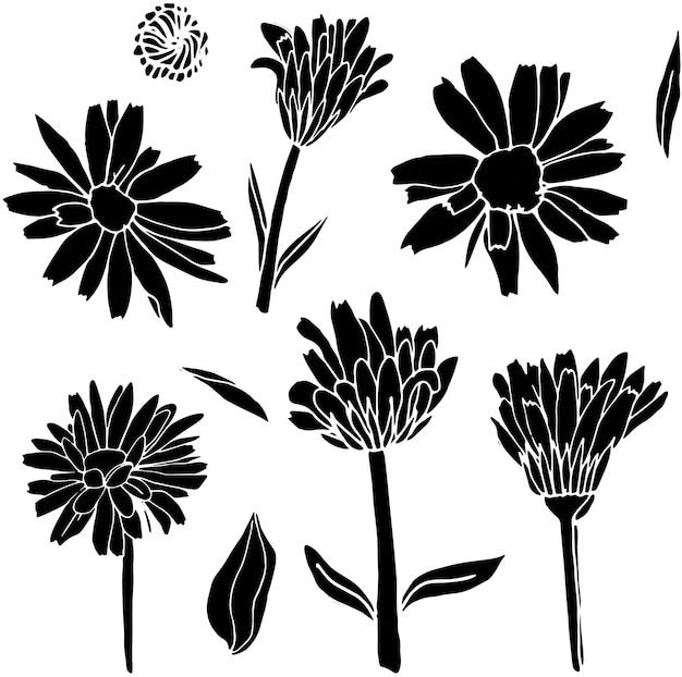 Calendula silhouet op een witte achtergrond verzameling van logo's set van decoratieve elementen
