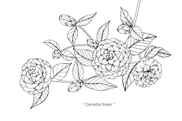 Camellia bloem tekening illustratie.
