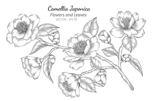 Camellia japonica-bloem en bladtekeningillustratie