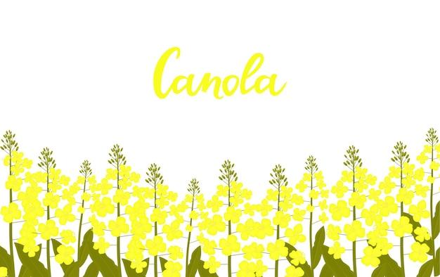 Canola hand getekende letters. koolzaad groeit in een weiland.