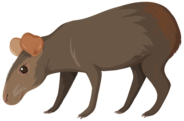 Capibara wild dier op wit