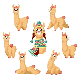 Cartoon alpaca, lama grappig dier in houdingen met traditionele kledingkarakters van peru
