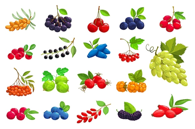 Cartoon bessen duindoorn, zwarte appelbes en kers. bosbes, meidoorn en rode bosbes met vogelkers, kamperfoelie en viburnum. druif, lijsterbes, kruisbes en rozenbottel iconen set