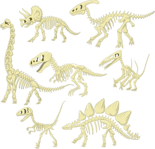 Cartoon dinosaurussen skelet collectie set