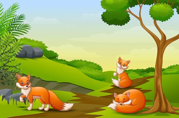 Cartoon drie een vos die op het gebied geniet van