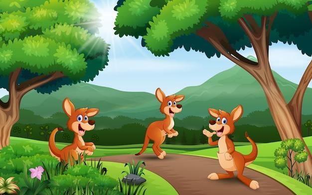 Cartoon drie kangoeroe spelen in de natuur