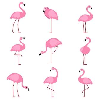 Cartoon foto's van exotische roze vogel flamingo