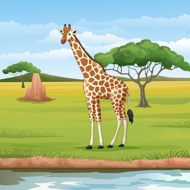 Cartoon giraffe in de savanne
