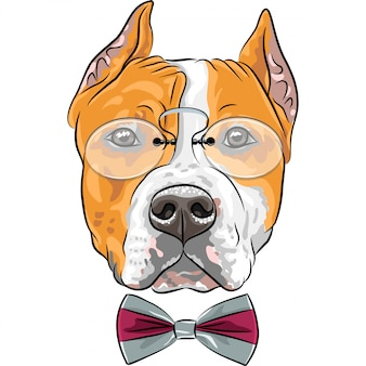 Cartoon hipster hond amerikaanse staffordshire terriër