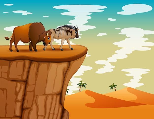Cartoon illustratie van een gnoe en bizon op de klif