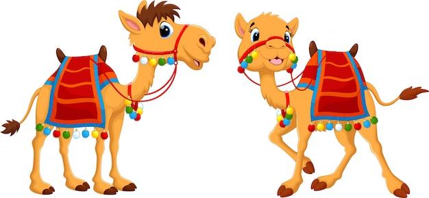 Cartoon kamelen met zadelmakerij