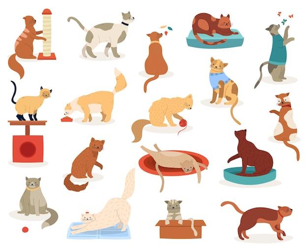 Cartoon katten. schattige katjeskarakters, grappige pluizige speelse katten, ras rassen huisdieren, schattige kitty huisdieren illustratie iconen set. kitten en kat, gezelschapsdierras, pluizige binnenlandse katachtige