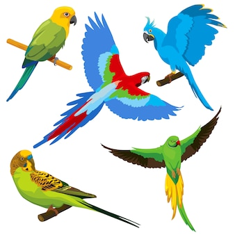 Cartoon papegaaien