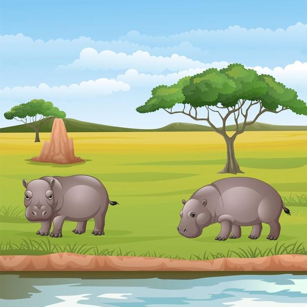 Cartoon twee nijlpaarden in de savanne