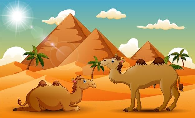 Cartoon van twee kamelen in de woestijn