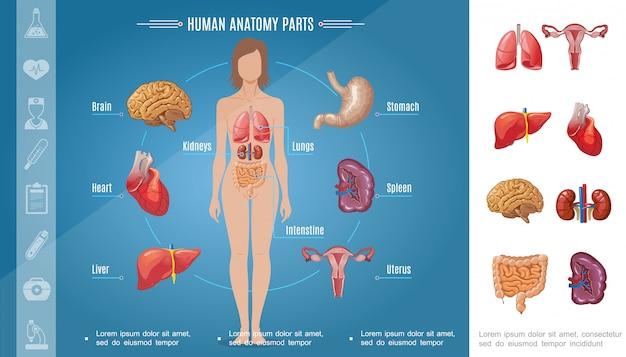 Cartoon vrouw lichaamsorganen samenstelling met hersenen maag longen nieren hart lever milt darm vrouwelijk voortplantingssysteem
