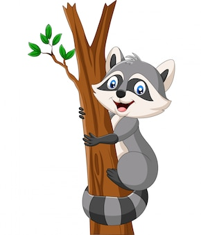 Cartoon wasbeer klimmen op de boom